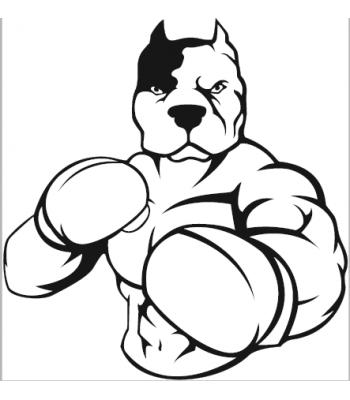 Boxing Pitbull