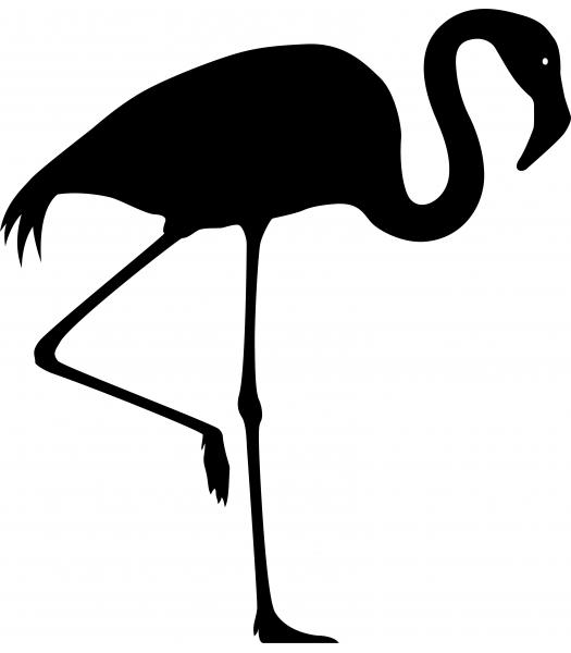 Flamingo - Dieren & Natuur