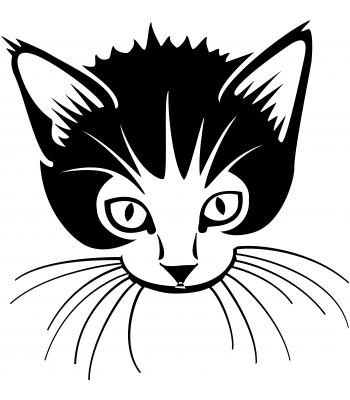 Kat - Dieren & Natuur