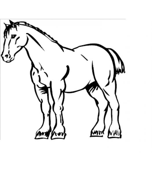 Paard10 - Dieren & Natuur