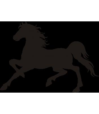 Paard12