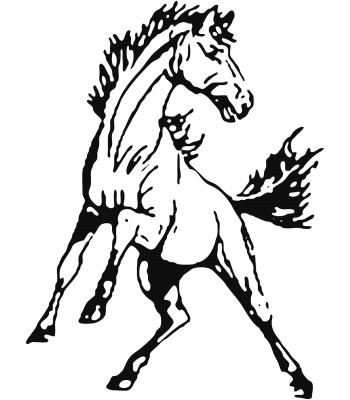 Paard4 - Dieren & Natuur