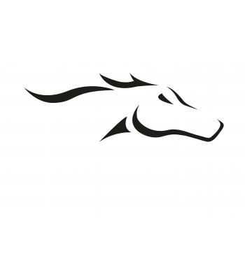 Paard8