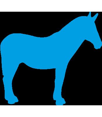Paard9