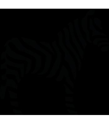 Zebra - Dieren & Natuur